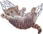gattino su amaca