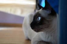 foto di un gatto