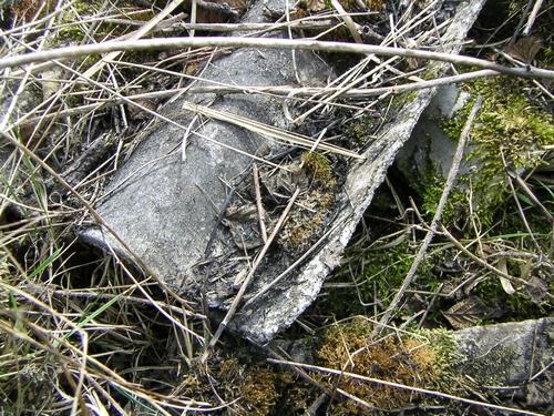 lastre amianto tra vegetazione