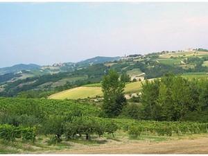 foto panoramica con vigne
