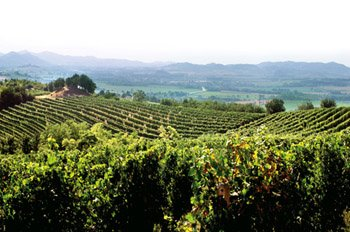 panorama con vigne